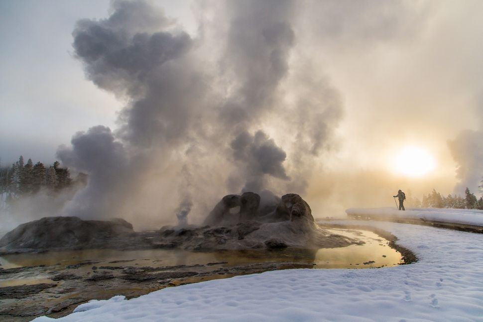 Grotto Geyser at Yellowstone National Park.