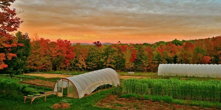 Soul Fire Farm in Grafton, New York, is using agriculture as a way to help heal racial injustice.
