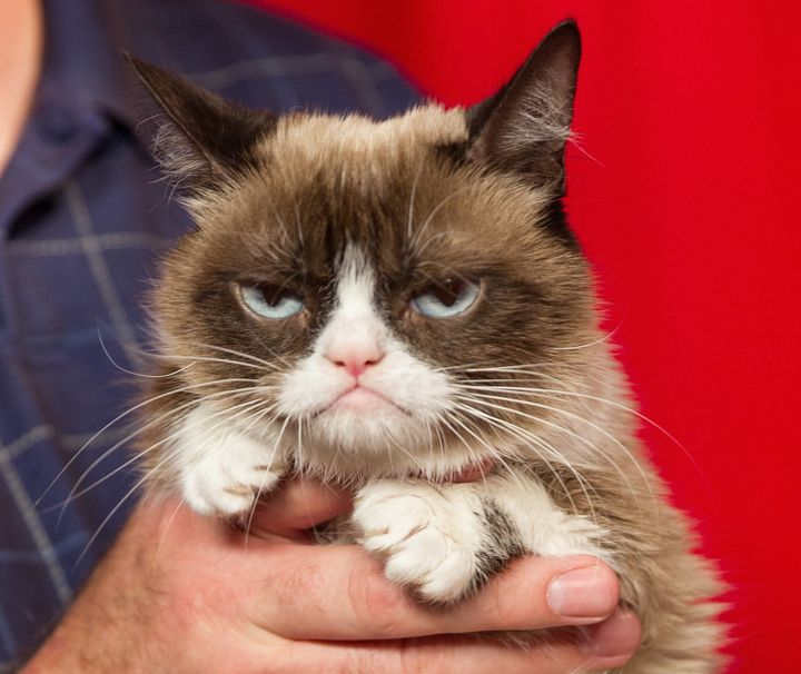 What's up, Grumpy Cat?