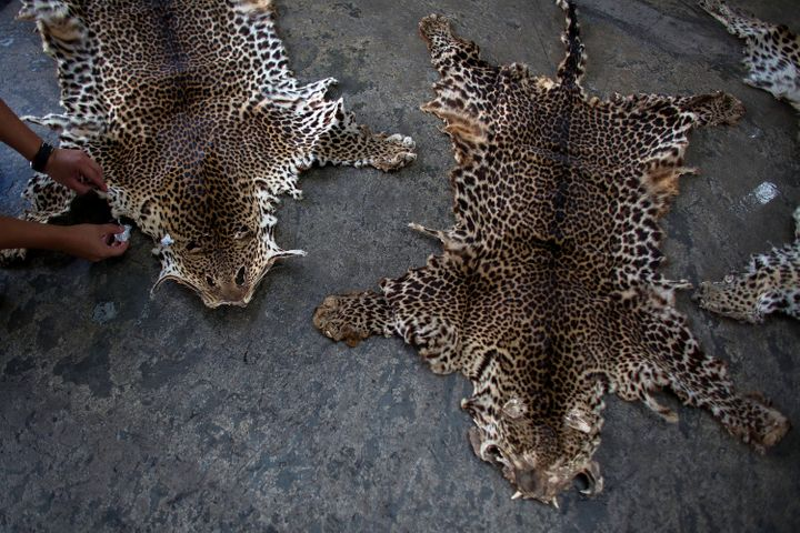 Leopard skins seized by Hong Kong customs officials.