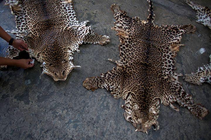 Leopard skins seized by Hong Kong customs officials.