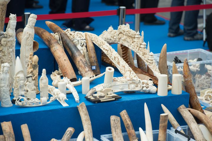 Illegal ivory and ivory products confiscated in China.