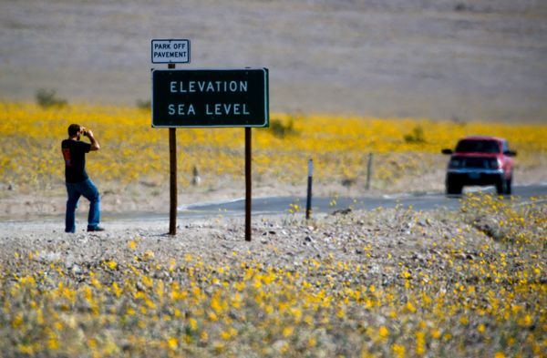 The usually barren landscape around the popular Sea Level sign along Hwy 190 in Death Valley National Park is now a little mo