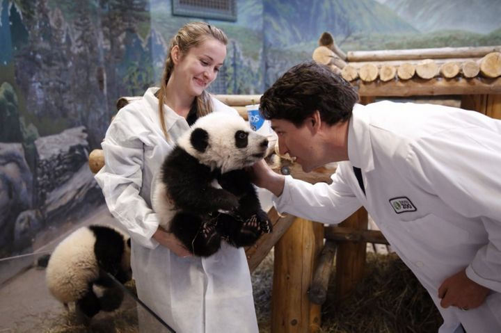 Canadian Prime Minister Justin Trudeau met the Toronto Zoo's two new baby pandas, Jia Panpan and Jia Yueyue, on Monday.