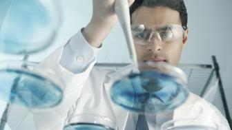 Scientist at work in laboratory