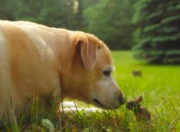 This Dog Playing With A Baby Bunny Will Make Your Heart Thump
