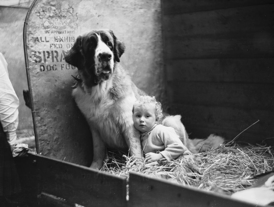 Baby John Hughes with his St Bernard, 'Moltie Mallone' at Cruft's dog in