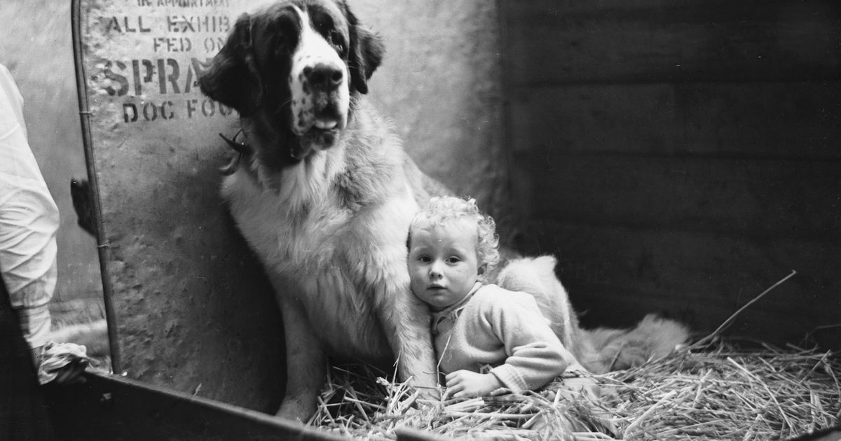 When Charles Cruft Organised His First Dog Show