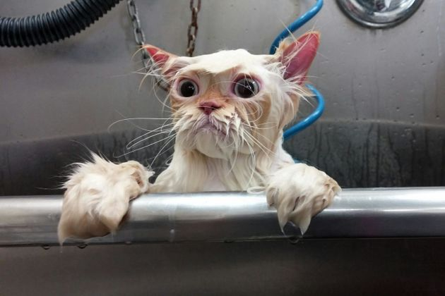 Wet Cat Gets The Photoshop