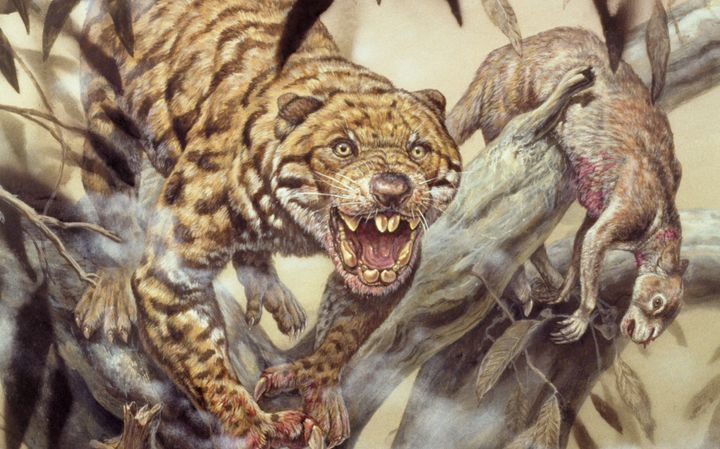 An artist's sketch of what the marsupial lion may have looked like.