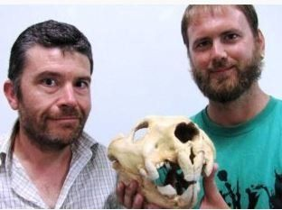 Flinders University Associate Professor Gavin Prideaux, left, and student Sam Arman pose with the skull of a marsupial l