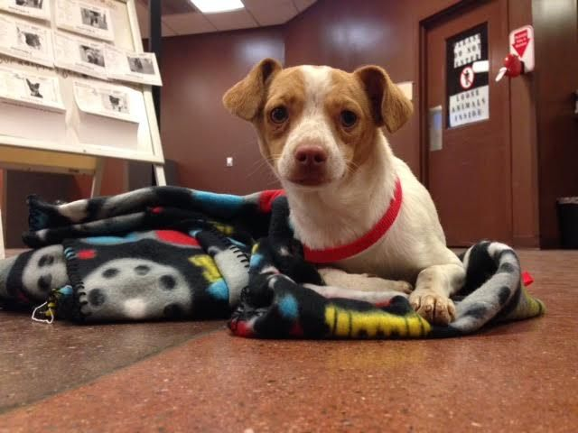 The little dog, since named Tahoe, may soon be looking for a new home.
