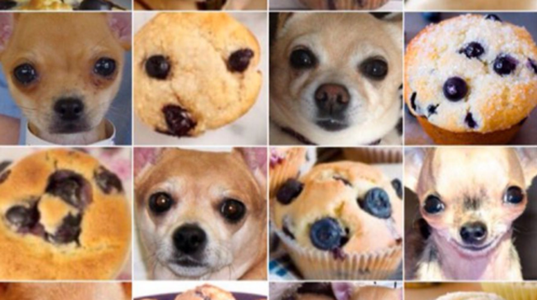 Is This A Muffin Or A Chihuahua? | HuffPost Life