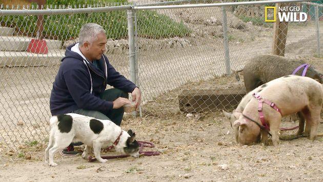 'Dog Whisperer' Cesar Millan Under Investigation For Possible Animal