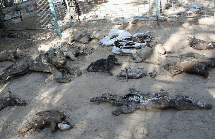 Two hundred animals have died from starvation in a zoo inGaza.