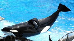 The Real Story Behind SeaWorld's 'Clearly Wrong' Statement On Its Dying Orca