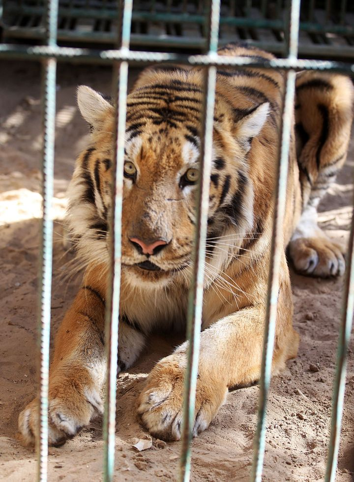 The few animals that remain alive are slowly starving in their cages.