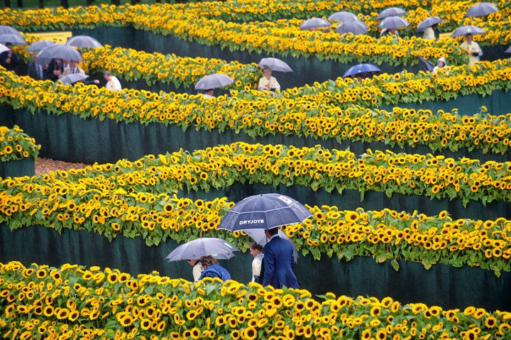 <i>A maze of sunflowers for the Van Gogh Museum Amsterdam. </i><br><i>Photo: courtesy the Van Gogh Museum.</i>
