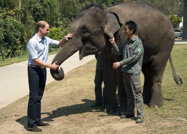 Prince Williamfeeds carrots to Ran Ran, a 13-year-old female Elephant at Xishuangbanna sanctuary...
