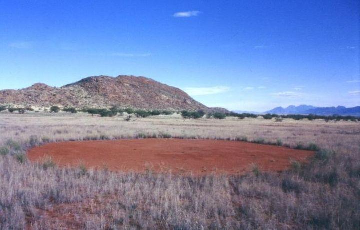 A single fairy circle in Namibia.