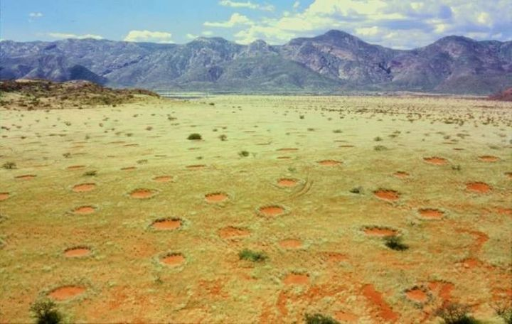 Fairy circles in Namibia.