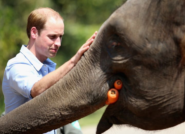 The duke of Cambridge, who is the president of United for Wildlife charity, has a soft spot for animals. Here he pets a rescu