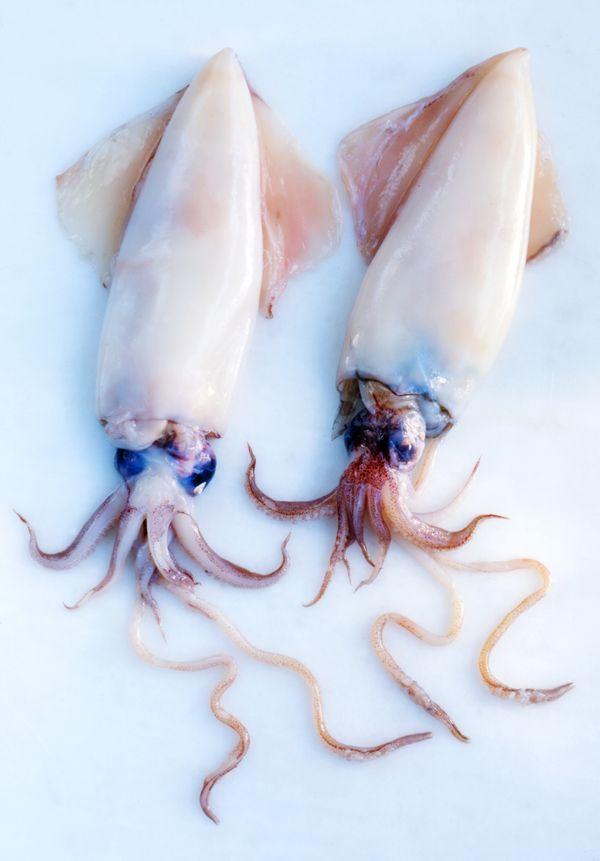 <i>Mmm</i>, looks like calamari.