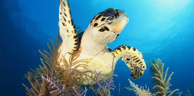 Sea turtle off the coast of