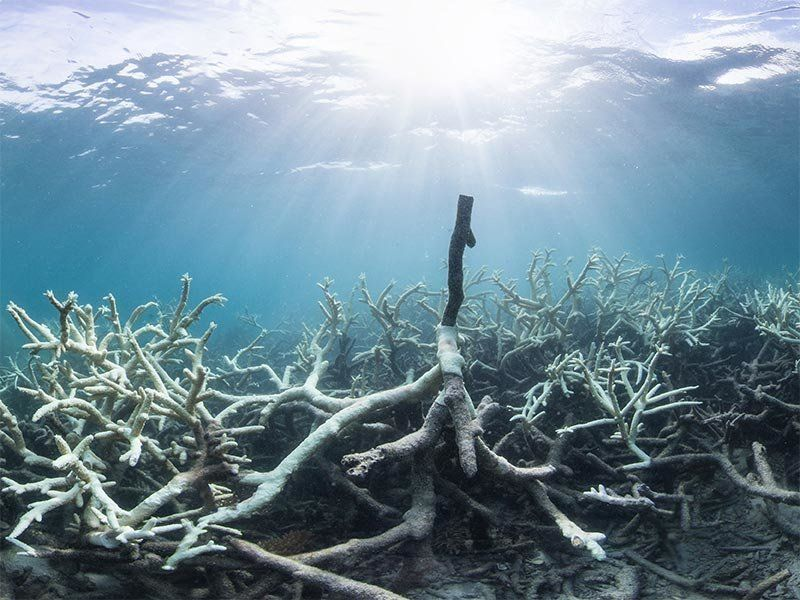Injury to Great Barrier Reef From Scientists Say, Global Warming Is Irreversible