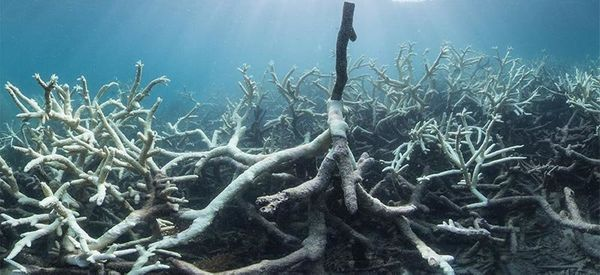 Swathes Of The Great Barrier Reef Suffer 'Complete Ecosystem Collapse'