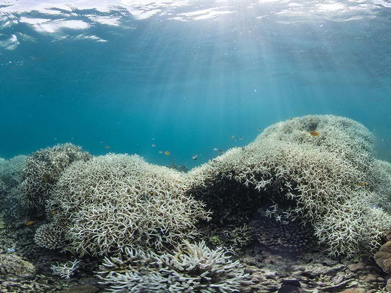 Coral bleaching at Lizard Island, Great Barrier Reef.