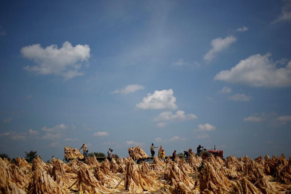 Migrant workers participate in the U.S. Department of Labor's H-2A temporary agricultural program, which allows agricultural