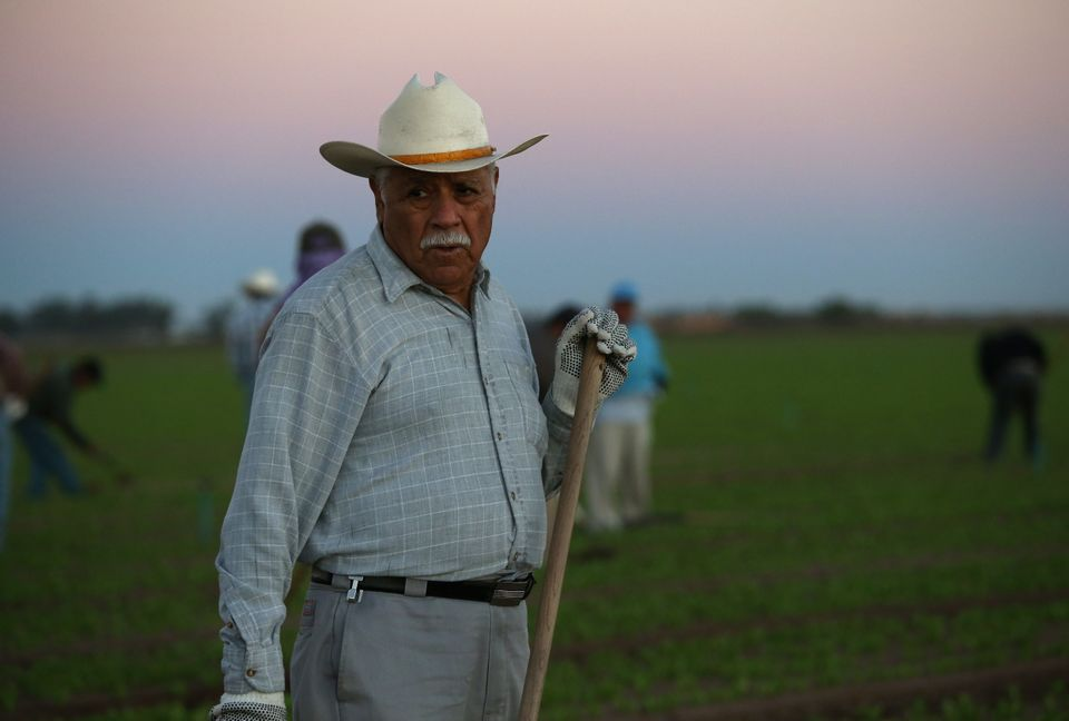 A Mexican agricultural worker cultivates lettuce on a farm in Holtville, California.