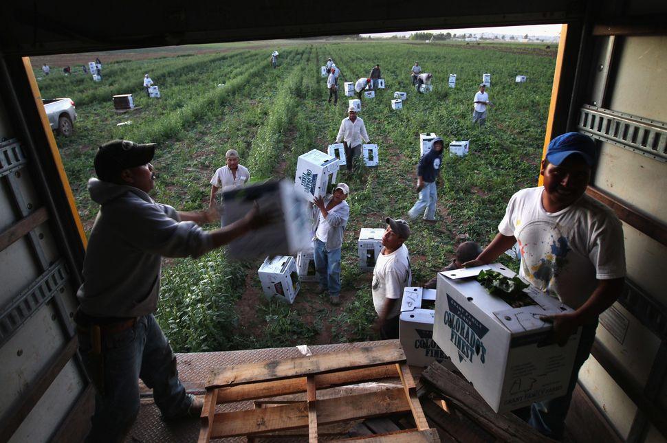 the origin of migrant farmworkers essay