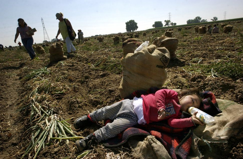 18-month-old Vanessa Torrez sleeps in a field at Mayer Farm in Colorado whereher mother, Veronica, a Mexican migrant wo