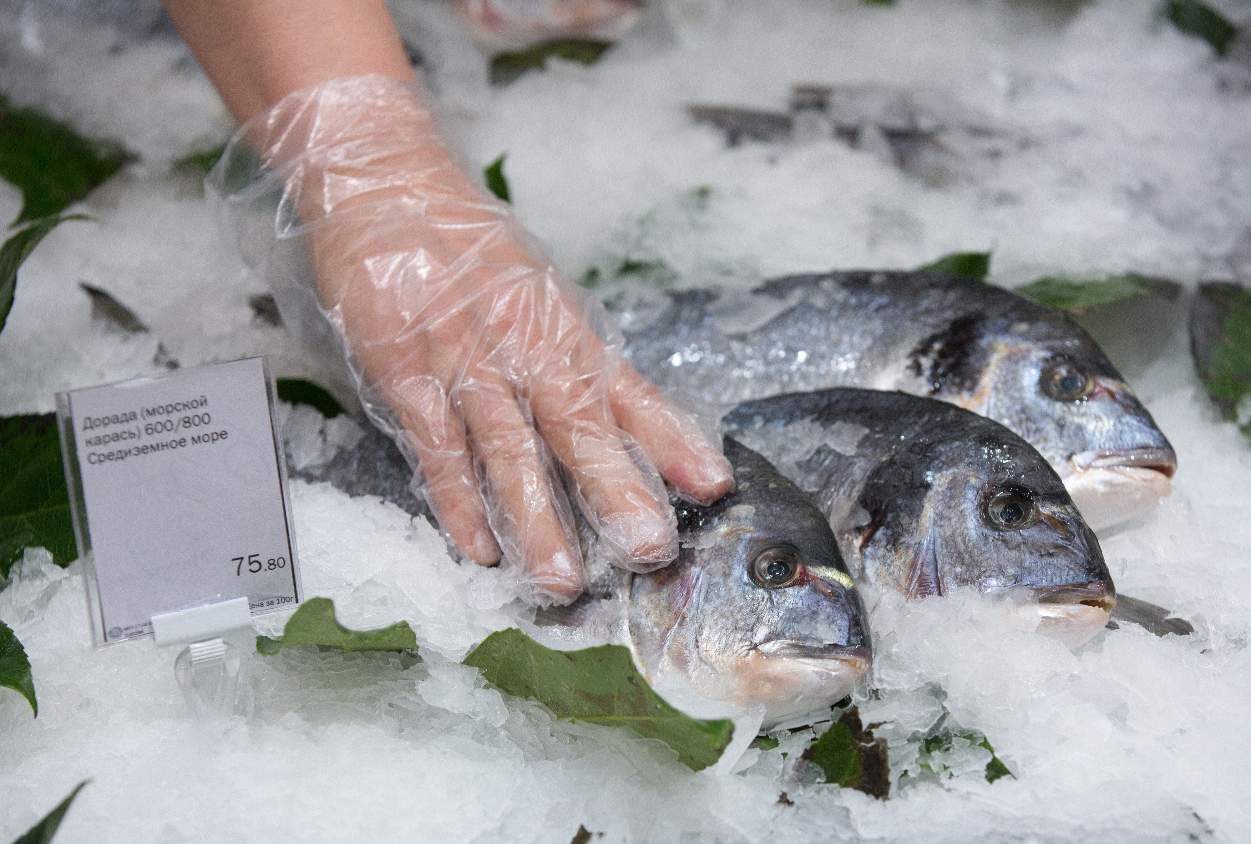A worker arranges fresh dorado fish in a display of ice at the fishmonger's counter of an Azbuka Vkusa OOO, which translates as 'Elements of Taste,' supermarket at the Neglinnaya Plaza shopping center in Moscow, Russia, on Thursday, Feb. 19, 2015. Russia in August banned food imports from the U.S. and the European Union in retaliation for the economic sanctions, just as plunging oil prices sent its energy-dependent economy closer to recession. Photographer: Photographer: Andrey Rudakov/Bloomberg via Getty Images
