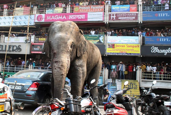 A wild elephant wandered into theIndian town ofSiliguri last month, damaging cars and homes.