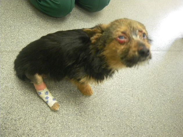 'Chunky' the Chihuahua cross was stolen, set on fire, and punched and attacked until his neck broke....