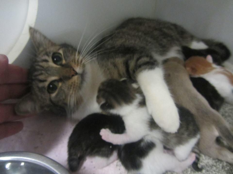 steel kittens wrestling