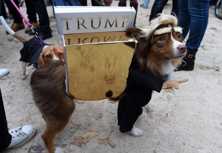 "The landlord does not have a clear policy on dogs that are also&nbsp;Trump impersonators. (See more of this dog on <a href=""h"