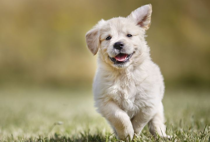 This is not a lawmaker's puppy. It's a bonus puppy!