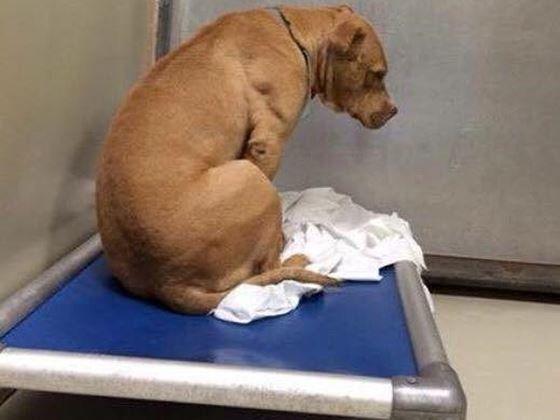 悲しそうなマーチ。1枚の写真が、施設に引き取ってもらえなかった犬の運命を変えた