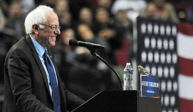 Democratic presidential candidate Sen. Bernie Sanders, I-Vt., smiles as a bird lands on his podium as...