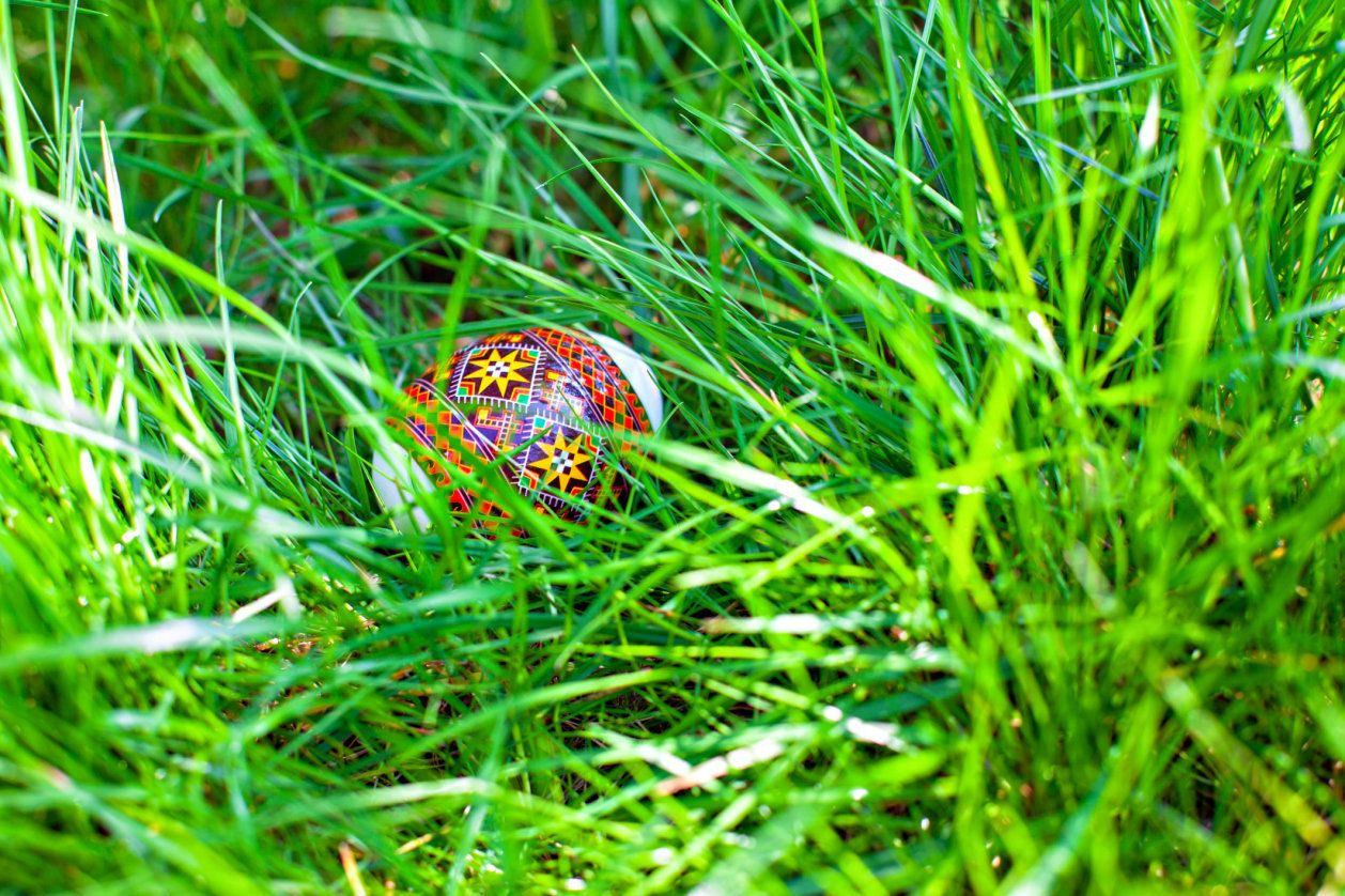 Colorful easter egg hidden in green grass