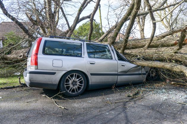 A Cars crushed by a falling tree in Brighton,