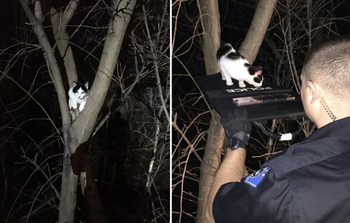 Officers with Nebraska'€™s La Vista Police Department helped save a cat that was found stuck in a tree (left) by guiding it d