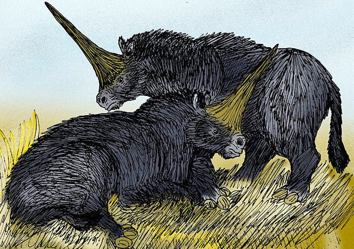 An illustration of what the extinct species&nbsp;<i>Elasmotherium sibiricum </i>may have looked like.