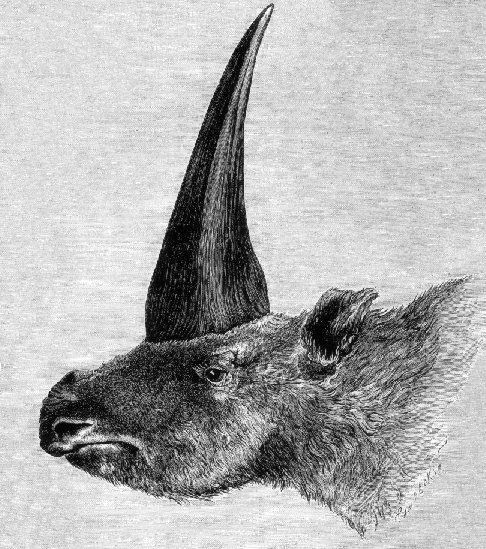 The first published artistic restoration of Elasmotherium sibiricum, in