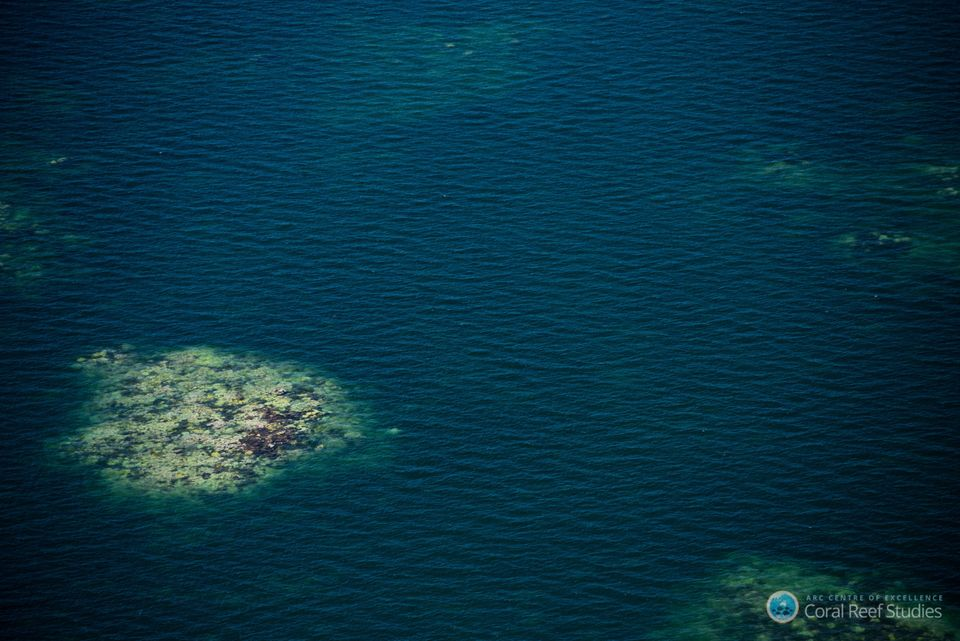 A patch of bleached coral stands out in a section of the Great Barrier Reef photographed during a recent...