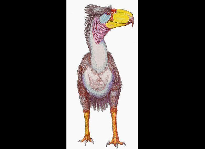This North American bird, which stood over 8 feet tall, would have had an enormous, axe-like beak.